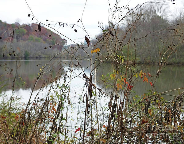 Photograph - Chattahochie Nature Center River View by Lizi Beard-Ward