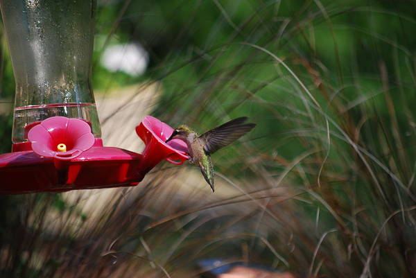Photograph - Check Out My Wings by Lori Tambakis