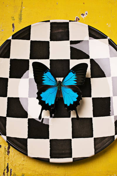 Checker Photograph - Checker Plate And Blue Butterfly by Garry Gay