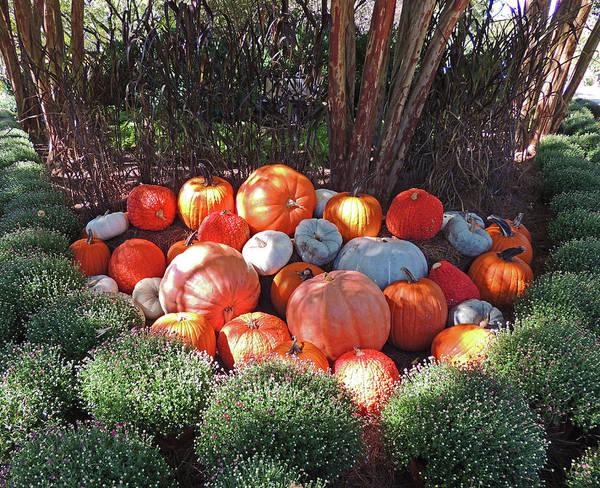 Trick Or Treat Digital Art - Cheekwood Gardens Most Sincere Pumpkin Patch by Marian Bell