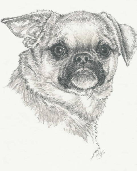 Mutt Drawing - Cheeky Cheeks by Barbara Keith