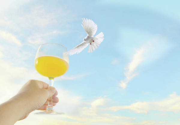 Mimosas Photograph - Peaceful Celebration by Diana Angstadt