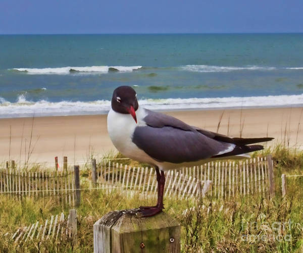 Photograph - Cheese By Seagull by Roberta Byram