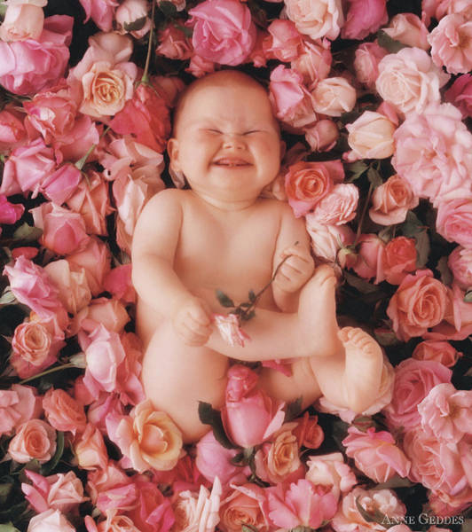 Pink Rose Photograph - Cheesecake by Anne Geddes