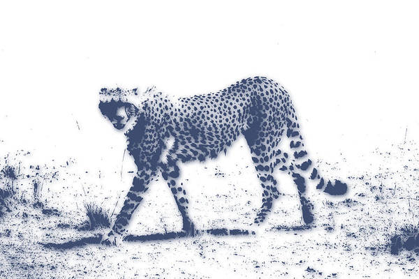 Cheetah Photograph - Cheetah 2 by Joe Hamilton