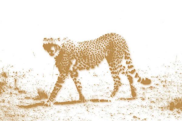 Cheetah Photograph - Cheetah 3 by Joe Hamilton
