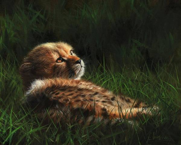 Painting - Cheetah Cub In Grass by David Stribbling