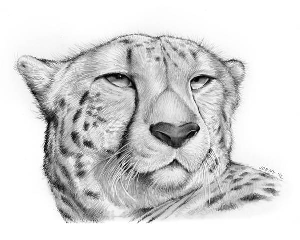 Flag Drawing - Cheetah by Greg Joens