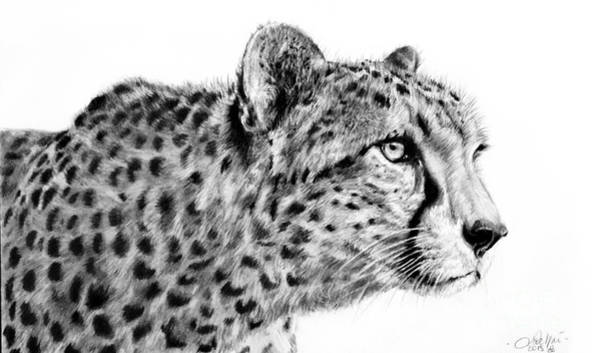 Drawing - Cheetah  by Lachri