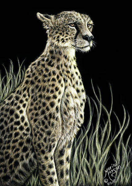 Drawing - Cheetah by Monique Morin Matson