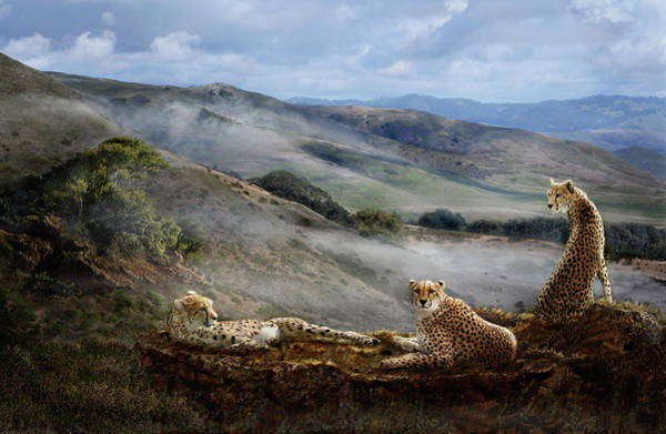Cheetah Ridge Art Print