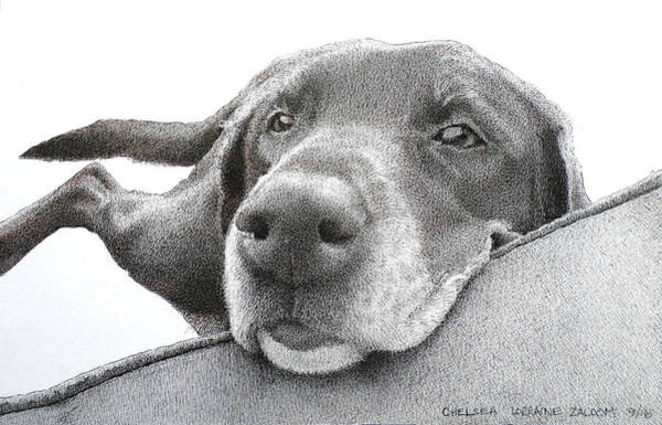 Mutt Drawing - Chelsea by Lorraine Zaloom