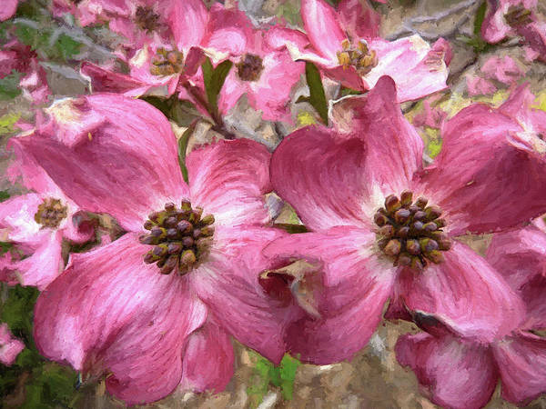 Wall Art - Photograph - Cherokee Chief Dogwood by Donna Kennedy