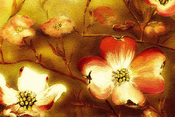 Painting - Cherokee Rose Dogwood - Glow by Jan Dappen
