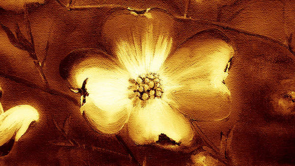 Painting - Cherokee Rose Dogwood - Single Glow by Jan Dappen