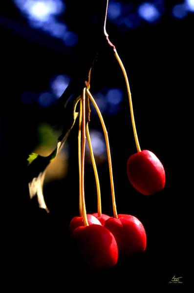 Photograph - Cherries by Sam Davis Johnson
