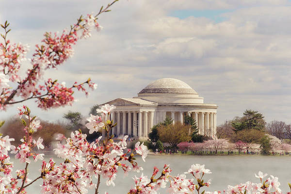 Photograph - Cherry Blossom And Jefferson by Rima Biswas