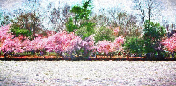 Cherry Blossom Day Art Print