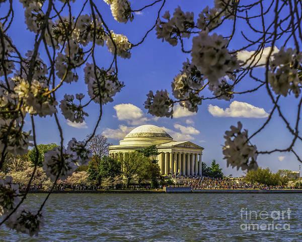 Photograph - Cherry Blossom Frame The Jefferson by Nick Zelinsky