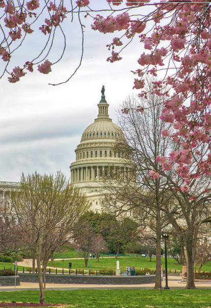 Photograph - Cherry Blossom Framing The United States Capitol by Juergen Roth