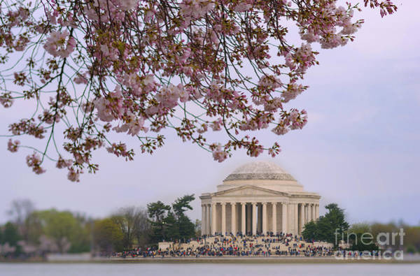 Photograph - Cherry Blossom Over Jefferson Memorial by Rima Biswas