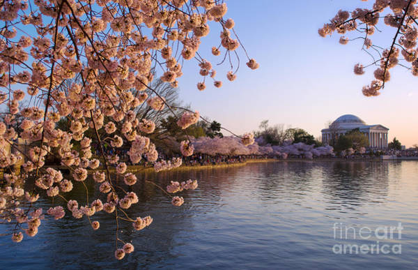 Photograph - Cherry Blossom Over Tidal Basin 2 by Rima Biswas