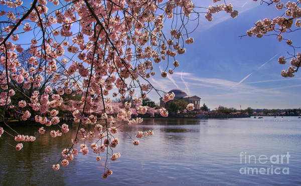 Photograph - Cherry Blossom Over Tidal Basin by Rima Biswas
