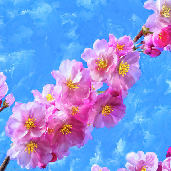 Painting - Cherry Blossom Pink - Impressions Of Spring by Mark Tisdale