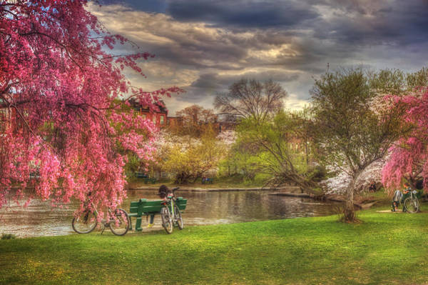 Photograph - Cherry Blossom Trees On The Charles River Basin In Boston by Joann Vitali