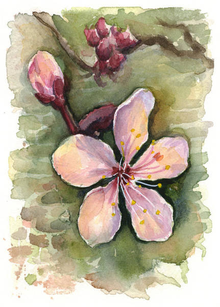 Pink Blossom Painting - Cherry Blossom Watercolor by Olga Shvartsur