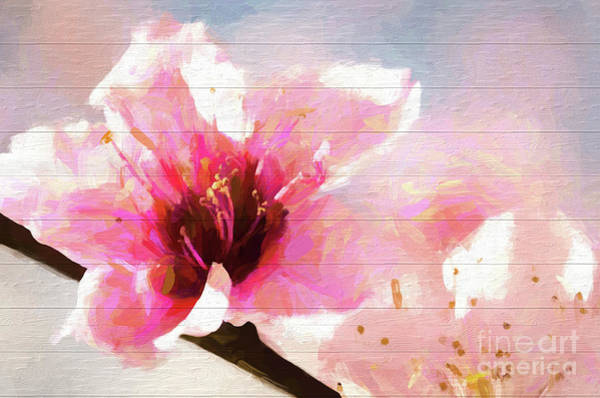 Photograph - Cherry Blossom Wood Background by Andrea Anderegg