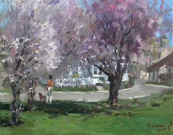 Blooming Tree Painting - Cherry Blossom by Ylli Haruni