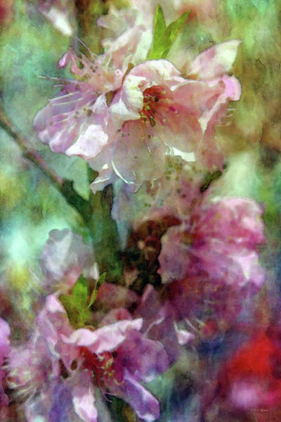 Photograph - Cherry Blossoms 9309 Idp_2 by Steven Ward