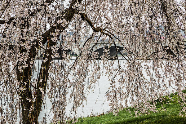 Photograph - Cherry Blossoms And Memorial Bridge 2 by Karen Saunders