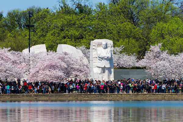 Photograph - Cherry Blossoms And Mlk Memorial by SR Green