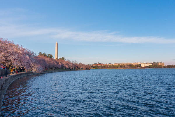 Photograph - Cherry Blossoms And Washington Monument by SR Green