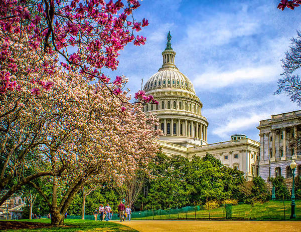 Cherry Blossoms At The Capitol Art Print