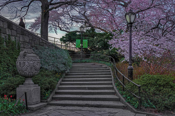 Photograph - Cherry Blossoms In Central Park Nyc by Susan Candelario