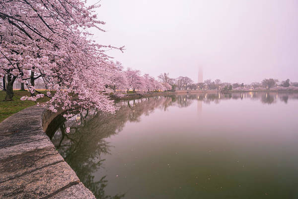 Cherry Blossoms In Fog Art Print by Michael Donahue
