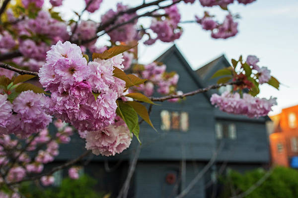Wall Art - Photograph - Cherry Blossoms In Front Of The Salem Witch House Salem Ma by Toby McGuire