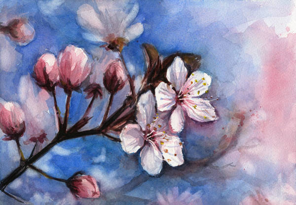 Cherry Wall Art - Painting - Cherry Blossoms  by Olga Shvartsur