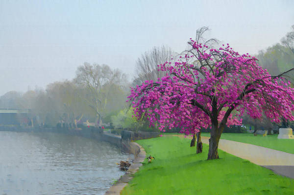 Photograph - Cherry Blossoms On Kelly Drive by Bill Cannon