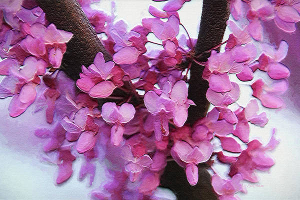 Digital Art - Cherry Blossoms Painted 3228 by Ericamaxine Price