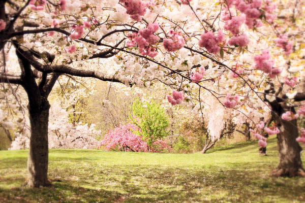 Photograph - Cherry Hill Morning by Jessica Jenney