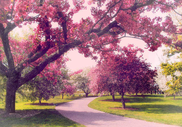Orchard Photograph - Cherry Orchard Charm by Jessica Jenney