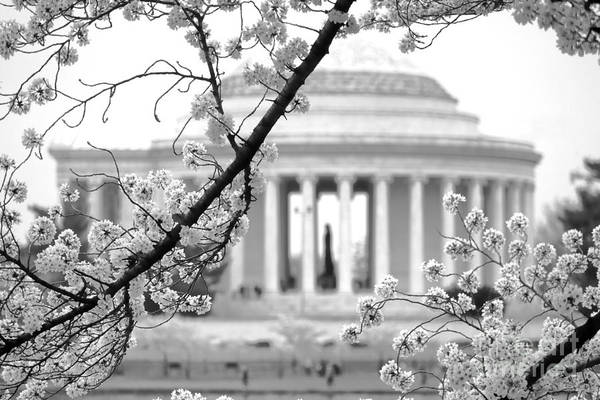 Jefferson Photograph - Cherry Tree And Jefferson Memorial Elegance  by Olivier Le Queinec