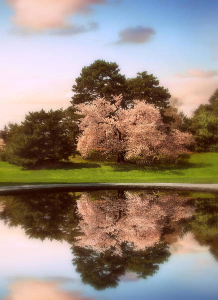 Photograph - Cherry Tree Fountain  by Jessica Jenney