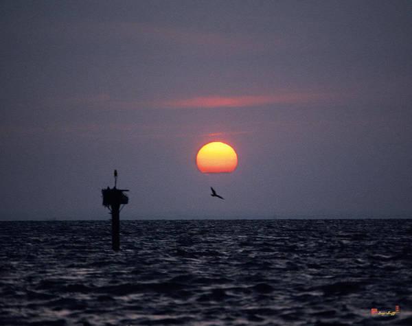 Photograph - Chesapeake Bay Osprey 14o by Gerry Gantt