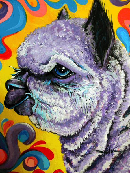 Alpaca Painting - Cheshire Alpaca  by Patty Sjolin