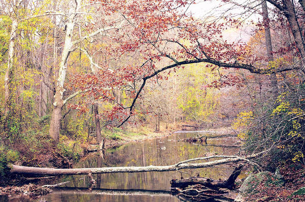 Photograph - Chester County Creek by Susan Maxwell Schmidt